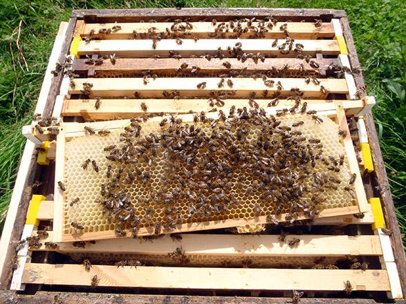 Pembrokeshire Bee Hive